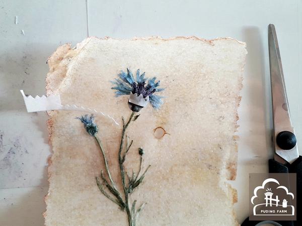 pf__2020__herbarium_TUTORIAL_16