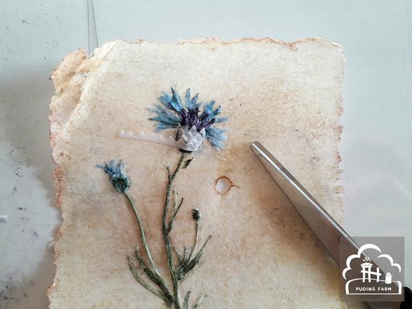 pf__2020__herbarium_TUTORIAL_17