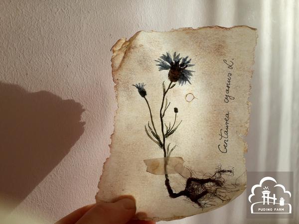 pf__2020__herbarium_TUTORIAL_19