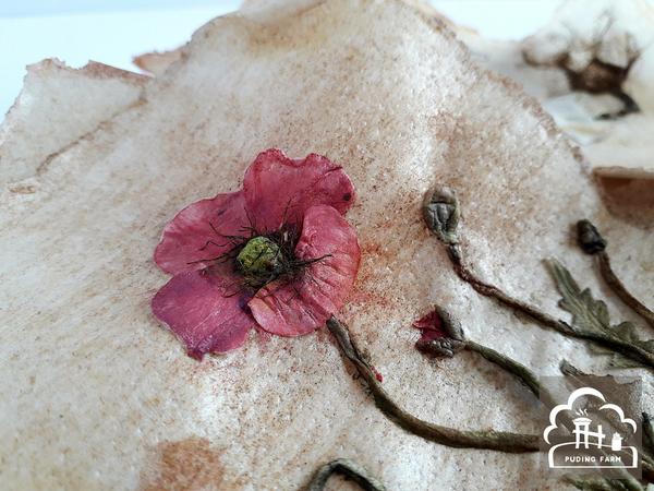 pf__2020__herbarium_02