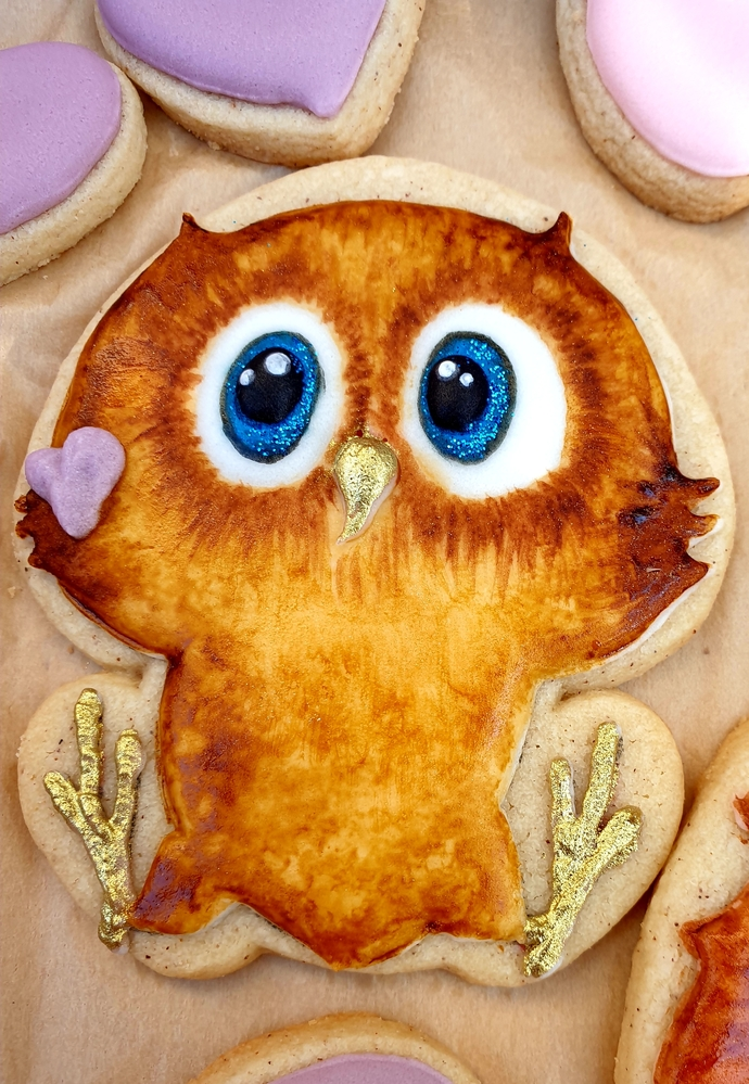 Cute Owl Close-up