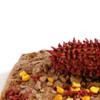 Dried Corn-cob: Banner